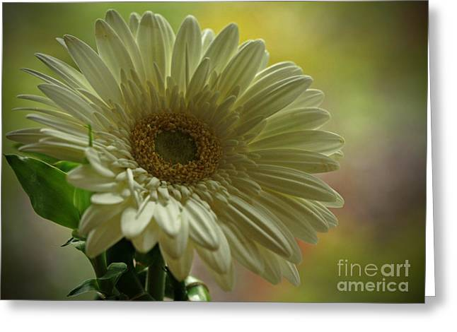 Shelley Myke Greeting Cards - Remember Me Greeting Card by Inspired Nature Photography By Shelley Myke