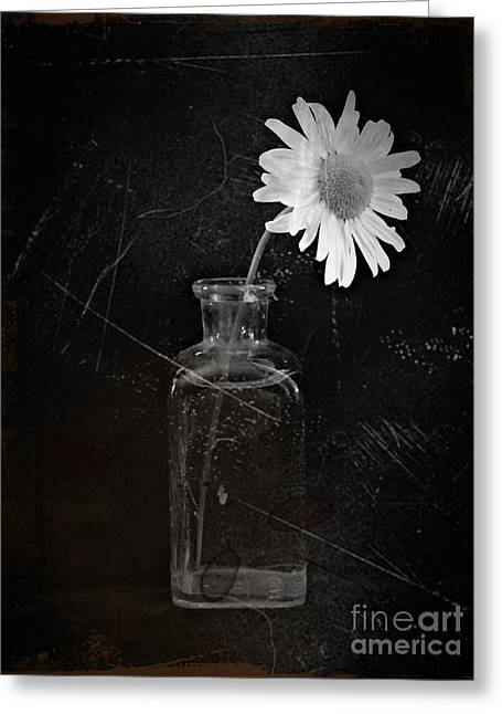 Aster Mixed Media Greeting Cards - Remembrance BW 1 Greeting Card by Chalet Roome-Rigdon