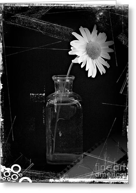 Asters Mixed Media Greeting Cards - Remembrance BW 4 Greeting Card by Chalet Roome-Rigdon