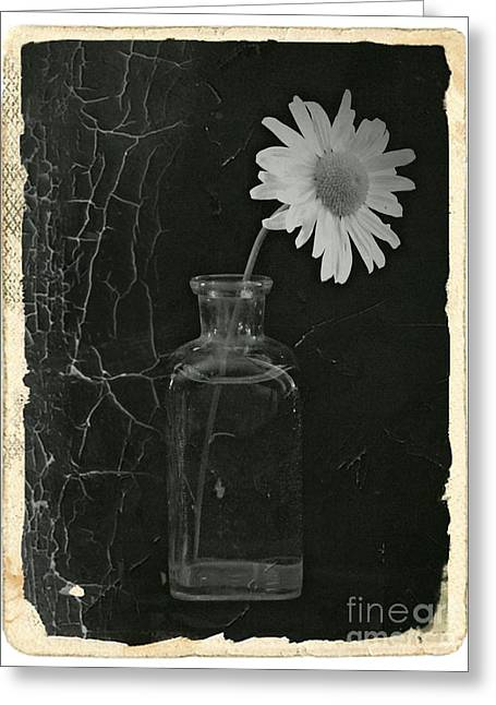 Aster Mixed Media Greeting Cards - Remembrance BW 7 Greeting Card by Chalet Roome-Rigdon