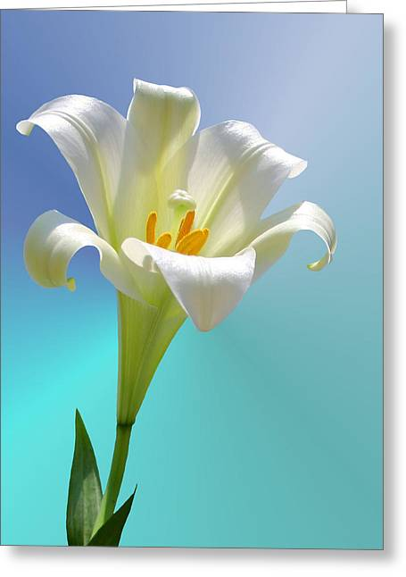 Spring Bulbs Greeting Cards - Remembrance Greeting Card by Kristin Elmquist