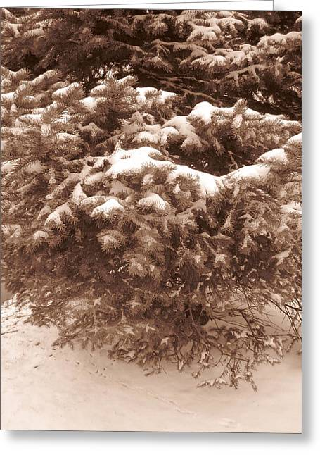 Guy Ricketts Photography Greeting Cards - Reminds Me Of An Evergreen Tree Greeting Card by Guy Ricketts