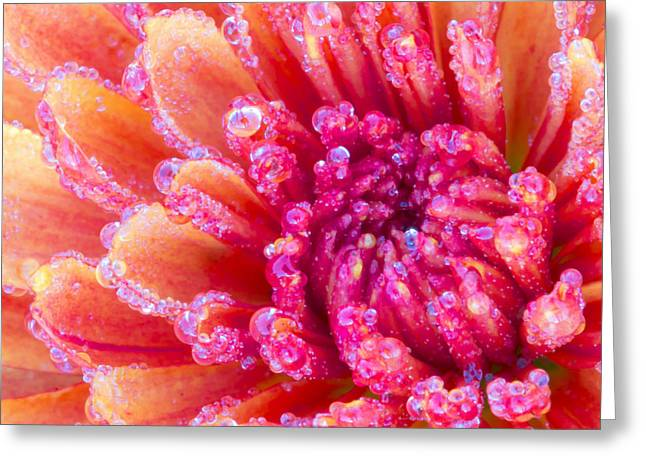 Close Focus Floral Greeting Cards - Reminiscent Of The 70s Greeting Card by Heidi Smith