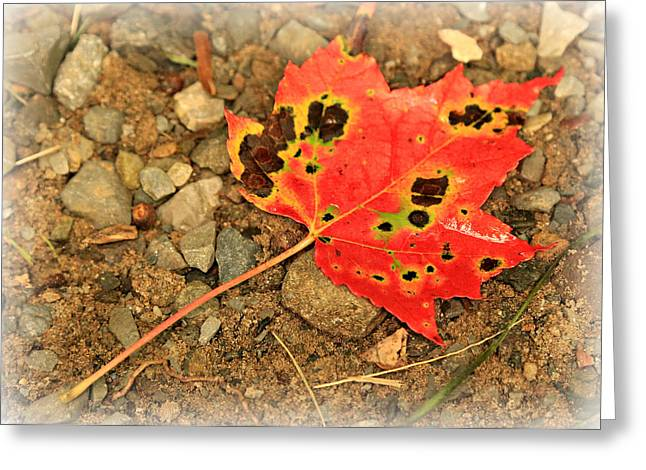 Fall Photography Greeting Cards - Remnant of Fall Greeting Card by Stephen Stookey