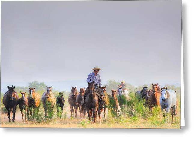Quarter Horses Greeting Cards - Remuda Run Greeting Card by Kelli Brown