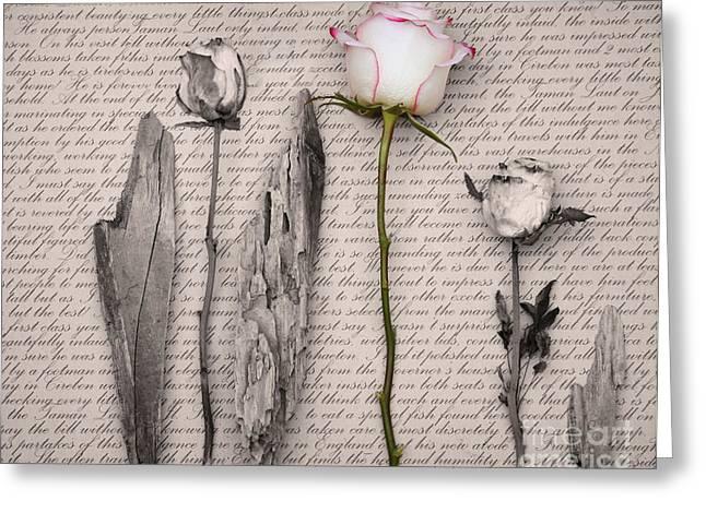 Renaissance Greeting Card by Sue Heaton