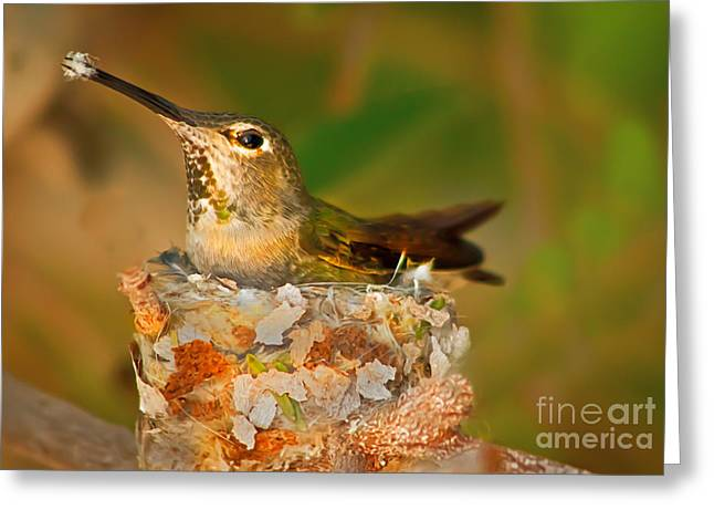Trochilidae Greeting Cards - Repairing  Greeting Card by Robert Bales