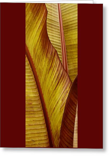 Repose - Leaf Greeting Card by Ben and Raisa Gertsberg
