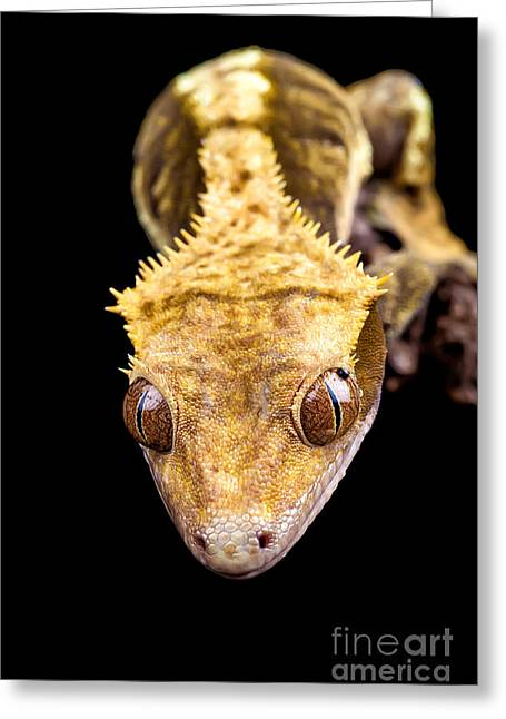 Changing Colour Greeting Cards - Reptile close up on black Greeting Card by Simon Bratt Photography LRPS