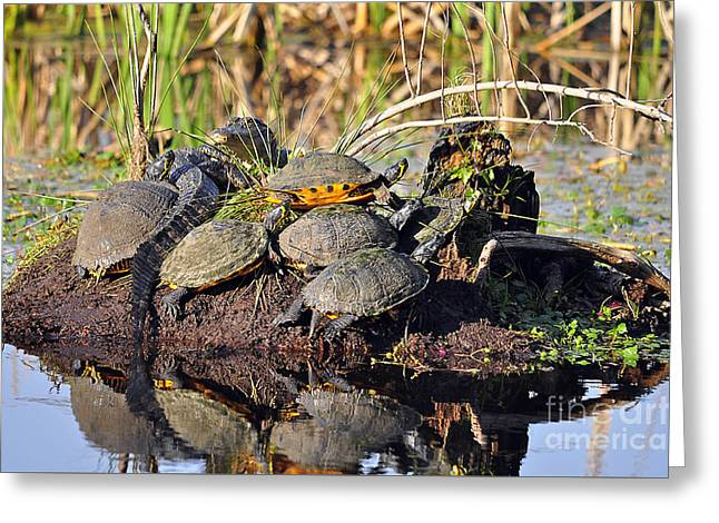 Al Powell Photography Usa Greeting Cards - Reptile Refuge Greeting Card by Al Powell Photography USA