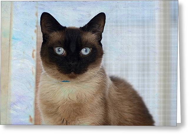 Cats Photographs Greeting Cards - Rescue Me 2 Greeting Card by Fraida Gutovich