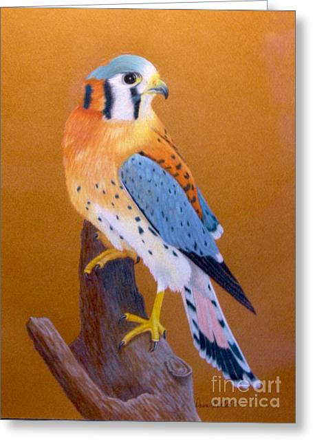 Rescue Drawings Greeting Cards - Rescued American Kestrel Greeting Card by Island Time Artwork by Dawn Nadeau Olmsted