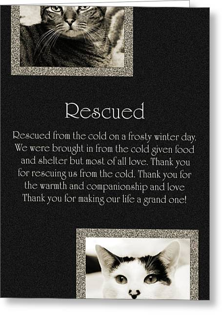 Rescued Greeting Card by Andee Design