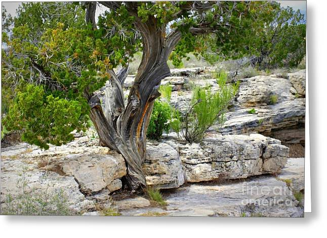 Montezumas Well Greeting Cards - Resilient Tree Greeting Card by Carol Groenen