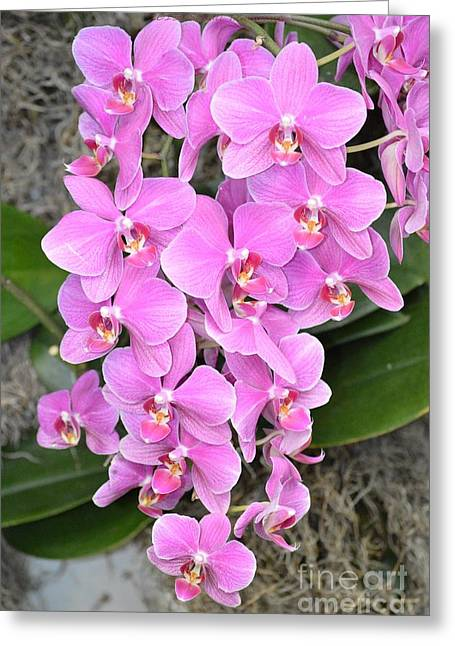 Magnificient Flowers Greeting Cards - Resplendent Orchid Greeting Card by Sonali Gangane