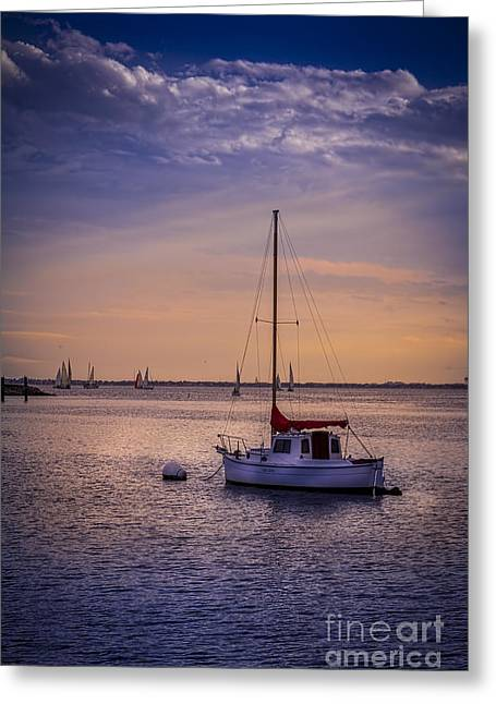 Tampa Bay Greeting Cards - Rest Day Greeting Card by Marvin Spates
