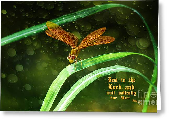 Amberwing Greeting Cards - Rest in The Lord Greeting Card by Beverly Guilliams