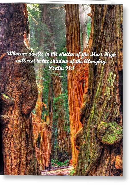 Marin County Greeting Cards - Rest in the Shadow of the Almighty - Psalm 91.1 - From Sunlight Beams Into the Grove at Muir Woods Greeting Card by Michael Mazaika