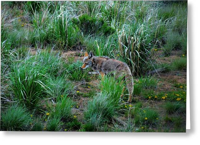 Wyoming Wildlife Greeting Cards - Rest My Eyes Greeting Card by Dan Sproul