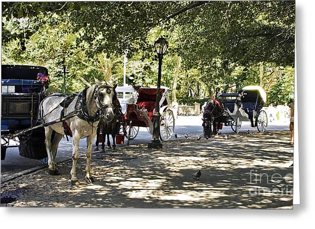 Rest Stop - Central Park Greeting Card by Madeline Ellis