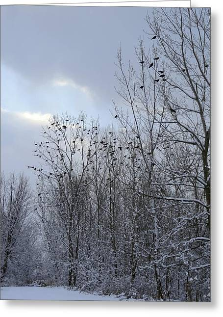Crows In Trees Greeting Cards - Rest Stop For Crows Greeting Card by Gothicolors Donna Snyder