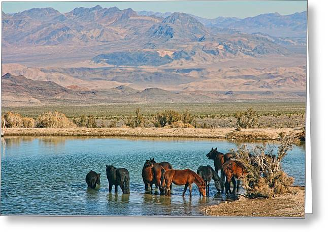 Rest Stop Greeting Card by Tammy Espino