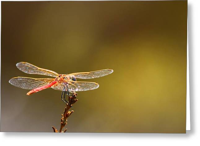 Dragonfly Art Greeting Cards - Rest Time 2 Greeting Card by FireFlux Studios