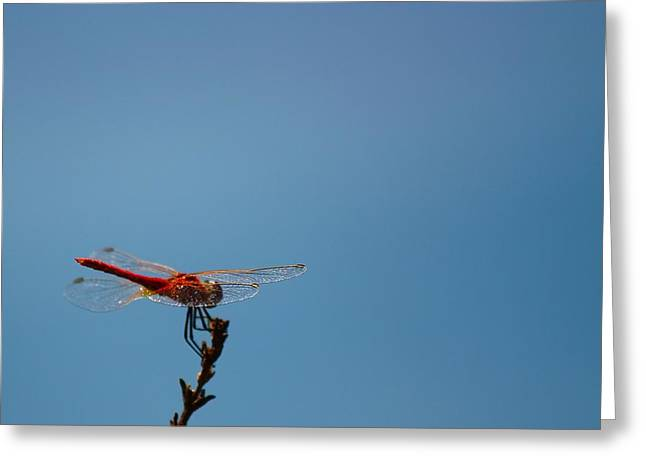 Dragonfly Art Greeting Cards - Rest Time Greeting Card by FireFlux Studios