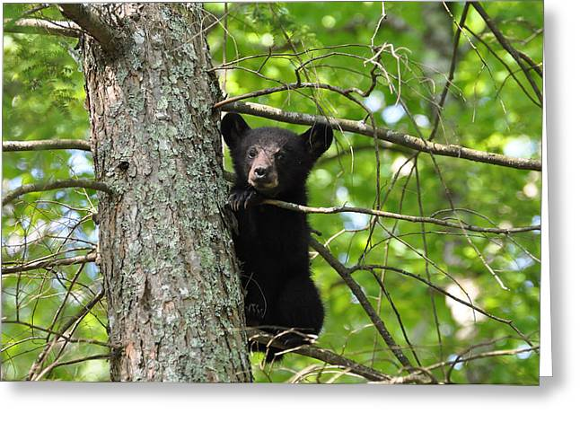 Black Nose Greeting Cards - Rest Time Greeting Card by Todd Hostetter