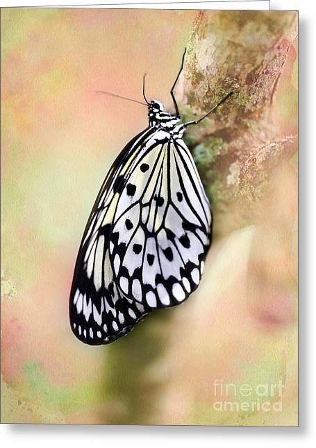 Rice Paper Greeting Cards - Restful Butterfly Greeting Card by Sabrina L Ryan