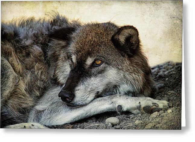 Preditor Photographs Greeting Cards - Restful Glance Greeting Card by Steve McKinzie