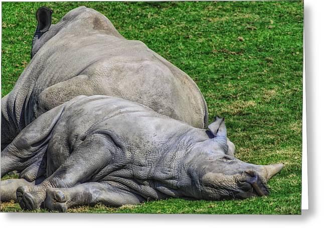 Rhinoceros Greeting Cards - Restful Rhinoceros Greeting Card by Camille Lopez