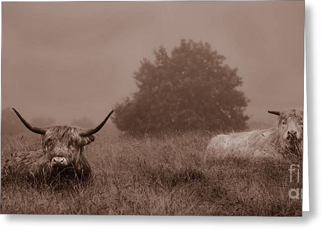 Resting Beasts Greeting Card by Linsey Williams