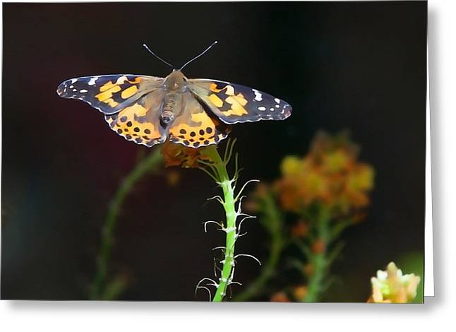 Renewing Greeting Cards - Resting Butterfly Greeting Card by Art Block Collections