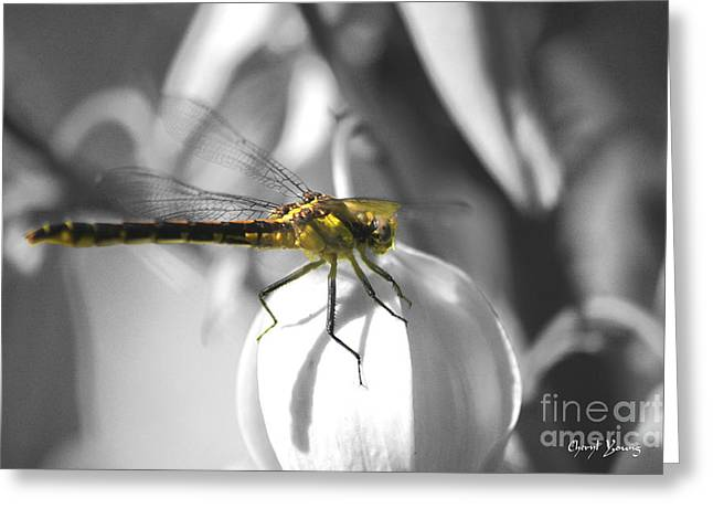 Flying Insect Greeting Cards - Resting Greeting Card by Cheryl Young