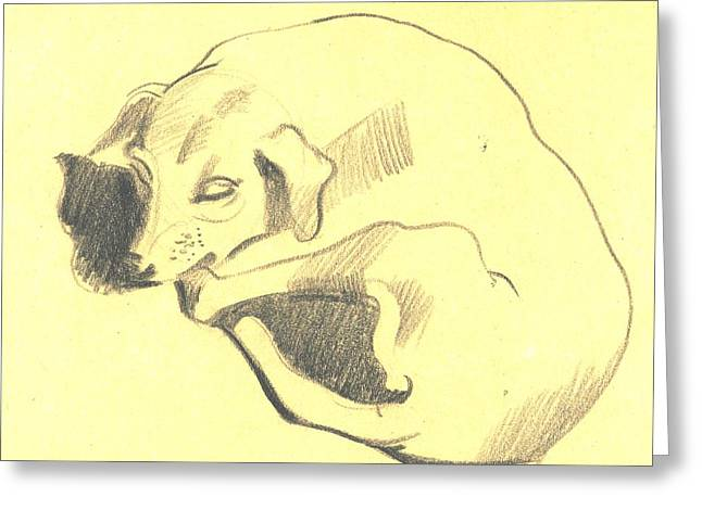 Work Place Drawings Greeting Cards - Resting Dog Sketched Greeting Card by Makarand Joshi