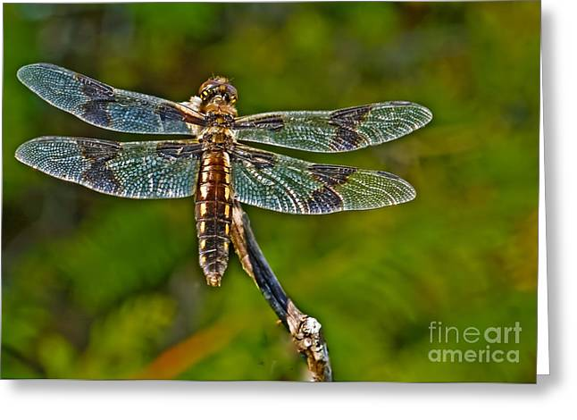 Junius Greeting Cards - Resting Dragonfly Greeting Card by Robert Bales