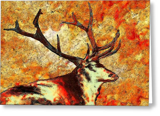 Dominant Greeting Cards - Resting Elk Greeting Card by Jack Zulli