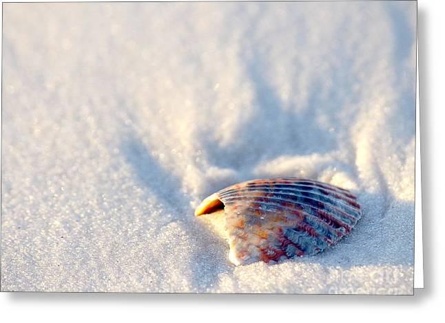 Seashell Greeting Cards - Resting Greeting Card by Liz Masoner