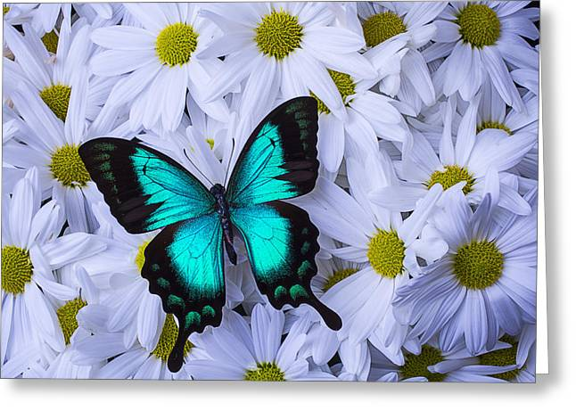 Gorgeous Flowers Greeting Cards - Resting On A Mum Greeting Card by Garry Gay