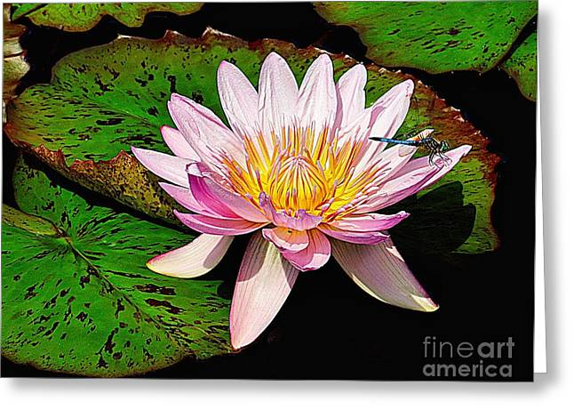 Water Lilly Greeting Cards - Resting on a Water Lily Greeting Card by Nick Zelinsky
