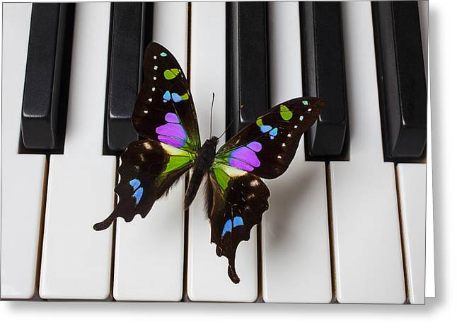 Fluttering Greeting Cards - Resting on the piano Greeting Card by Garry Gay
