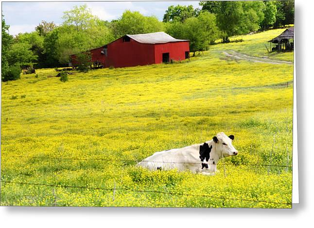 Red Barn Greeting Cards - Resting Place Greeting Card by Amy Tyler