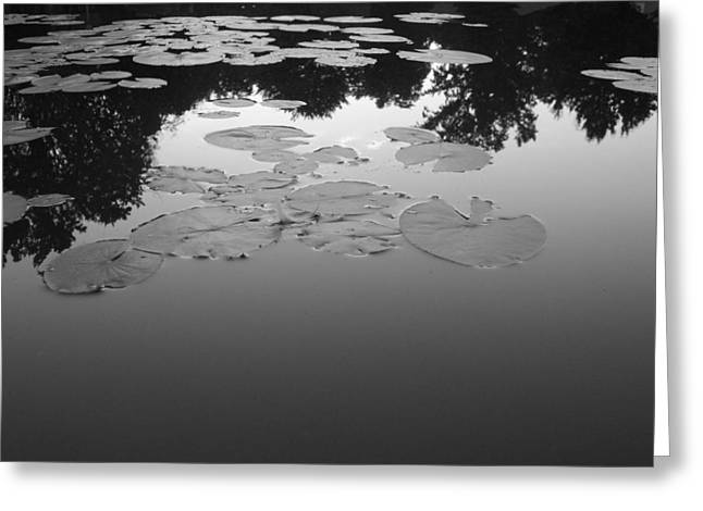 Lilly Pad Greeting Cards - Resting place Greeting Card by Mark C Ettinger