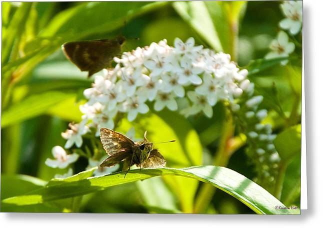 Gooseneck Loosestrife Greeting Cards - Resting Skipper Greeting Card by Kristin Hatt