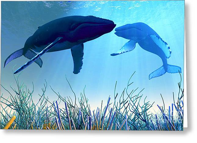 Sea Creature Pictures Greeting Cards - Resting Whales Greeting Card by Corey Ford