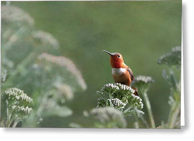 Resting With Nature Greeting Card by Angie Vogel