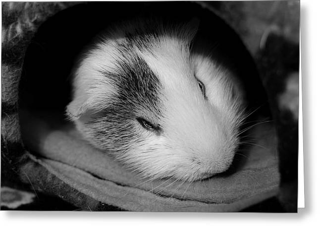 Cavy Greeting Cards - Restless Sleep Greeting Card by Luke Moore