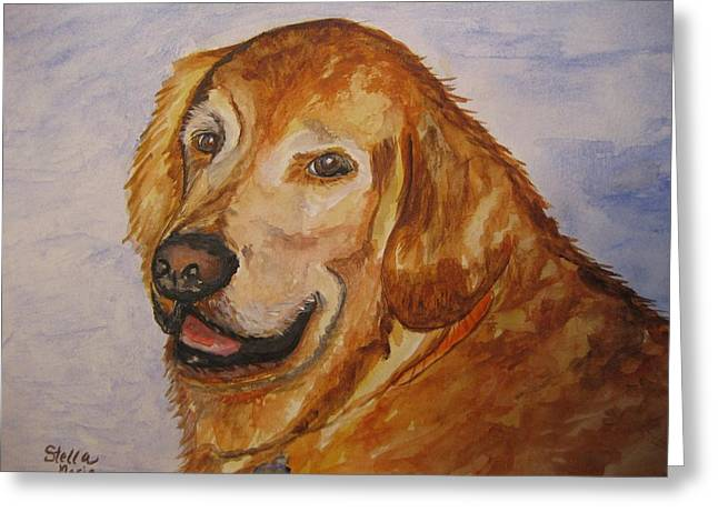Golden Retriever Cards Greeting Cards - Retriever in His Golden Years Greeting Card by Stella Sherman