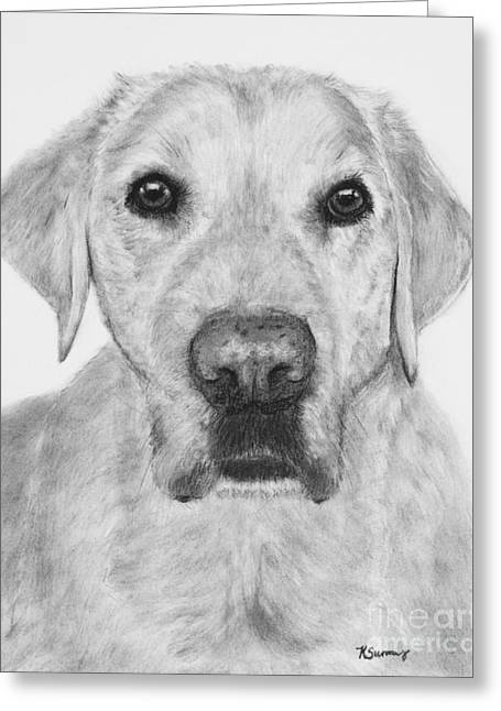 Working Dog Drawings Greeting Cards - Retriever Lab Drawing Greeting Card by Kate Sumners